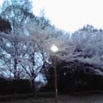 11-04-10_001.jpg