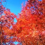 2012-11-25_101330.jpg